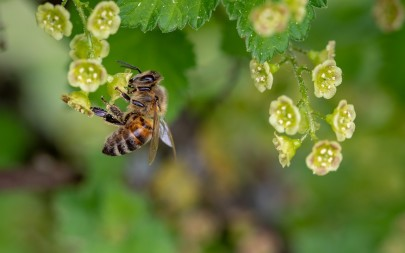Have the EU Finally Banned Bee-Harming Pesticides?