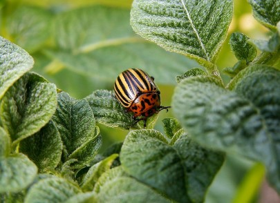 How Will Climate Change Affect Pests?
