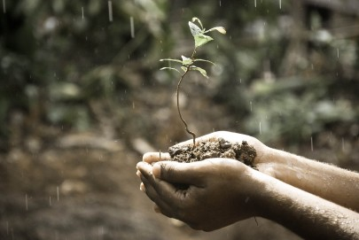 How Can Soil Quality Slow Global Warming?