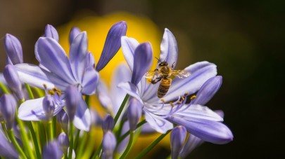 Which Plants Are Best for Bees?