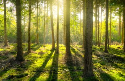 Is It Possible to Future-Proof Forests?