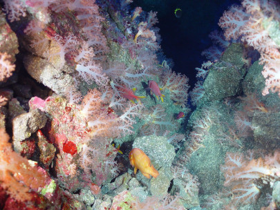 What's at the Very Bottom of the Mariana Trench?