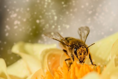 How Could Pollen Clean Water?