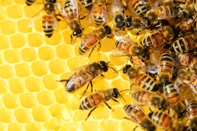 Bees Are Suffering from a Virus of Their Own, Scientists Find