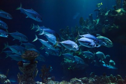 14 Countries Pledge to End Overfishing